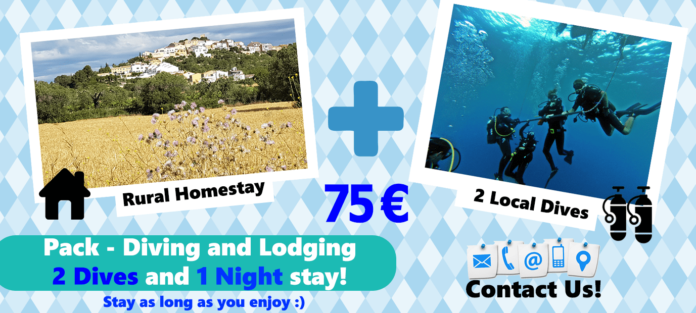Special Offer image lodging and diving